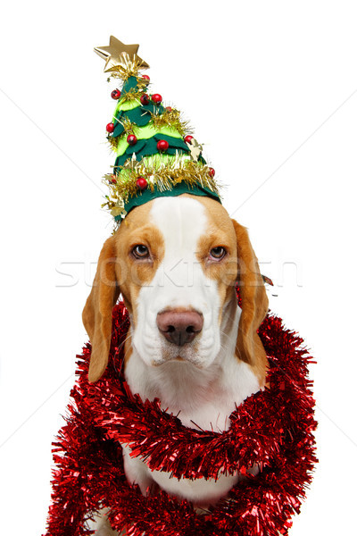 beautiful beagle dog in christmas tree hat  Stock photo © svetography
