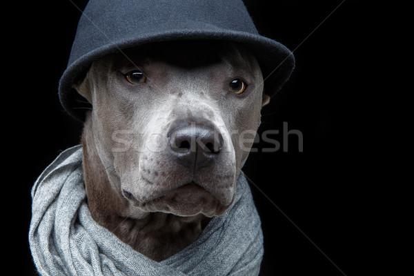 Stok fotoğraf: Güzel · Taylandlı · köpek · kapak · eşarp · genç