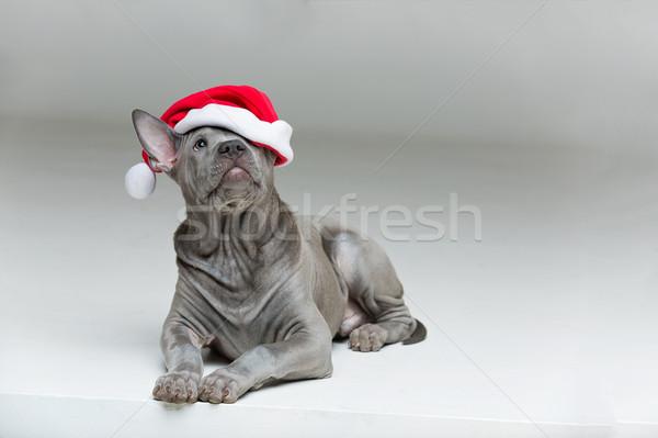 Foto stock: Thai · cachorro · seis · belo · meses