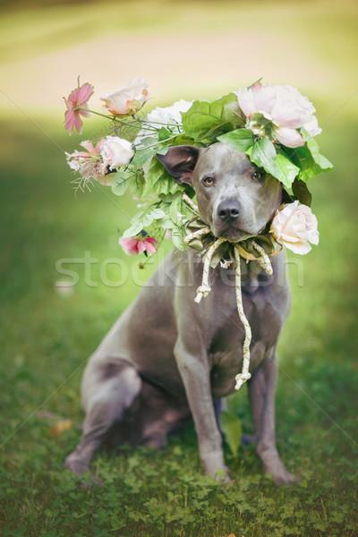 Stok fotoğraf: Taylandlı · köpek · çiçek · çelenk · güzel · genç