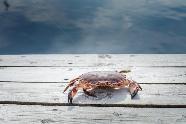 Levend krab permanente outdoor shot Stockfoto © svetography