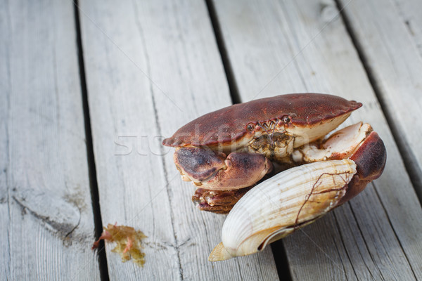 alive crab holding scallop in claw  Stock photo © svetography