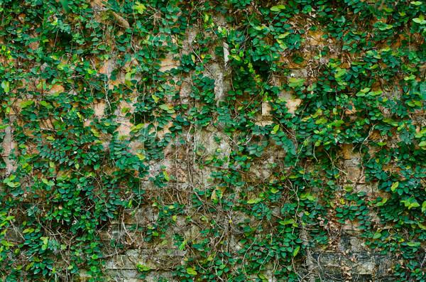 Klimop oude grunge rustiek stad textuur Stockfoto © sweetcrisis