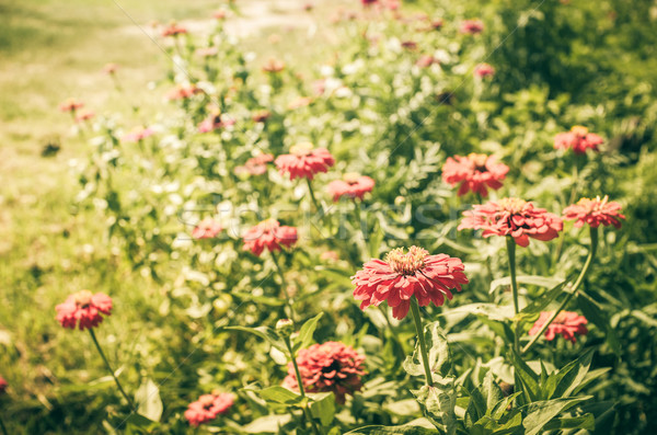 Flor vintage jardim natureza parque beleza Foto stock © sweetcrisis