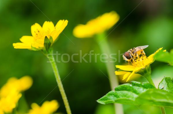 Fruto arquivos flor macro verde natureza Foto stock © sweetcrisis