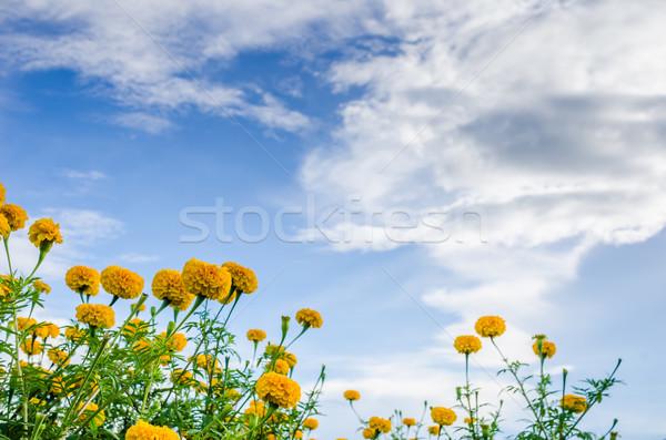 Virág természet kert fej növény Ázsia Stock fotó © sweetcrisis