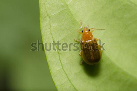 оранжевый жук зеленый природы саду весны Сток-фото © sweetcrisis