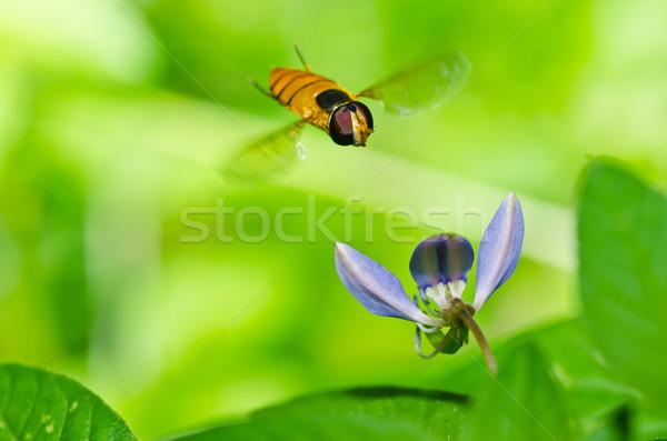Fruto arquivos flor verde natureza jardim Foto stock © sweetcrisis