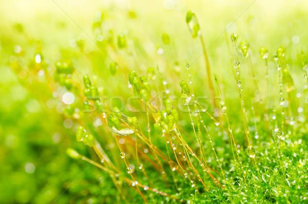 Friss moha zöld természet öreg kő Stock fotó © sweetcrisis