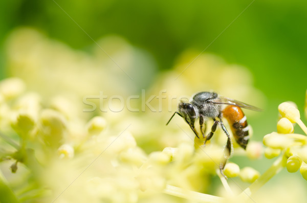 bee macro in green nature  Stock photo © sweetcrisis
