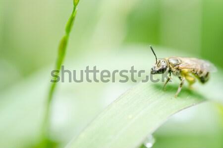 蜂 自然 緑 庭園 夏 ファーム ストックフォト © sweetcrisis