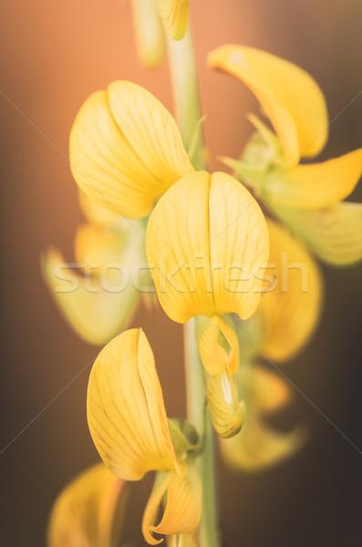 Sárga virág klasszikus kert természet park Thaiföld Stock fotó © sweetcrisis