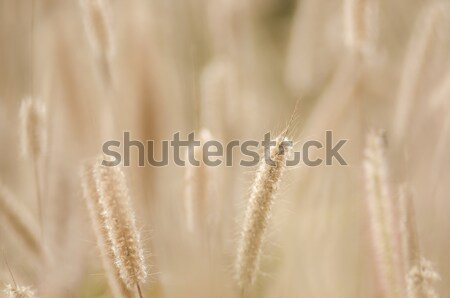 Enano hierba malezas plantas flores flor Foto stock © sweetcrisis
