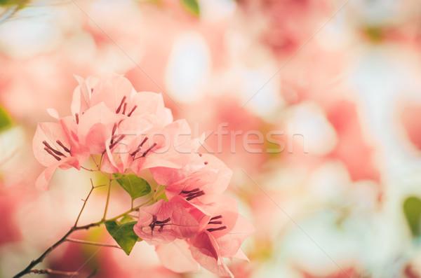 Papír virágok klasszikus kert természet park Stock fotó © sweetcrisis
