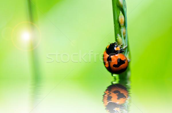 ストックフォト: てんとう虫 · 緑 · 自然 · 庭園 · 春 · 眼