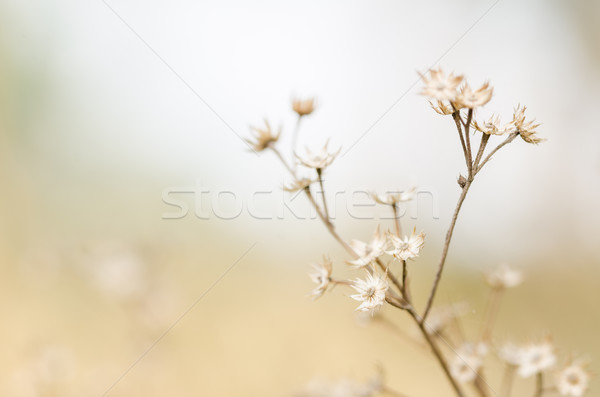 Fleur usine weed nature jardin printemps Photo stock © sweetcrisis