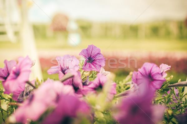 фиолетовый Vintage саду природы парка лист Сток-фото © sweetcrisis