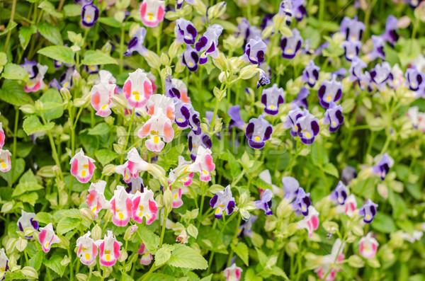 Virágok kert természet park fa levél Stock fotó © sweetcrisis