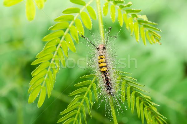 Foto d'archivio: Worm · verde · natura · giardino · alimentare · ape