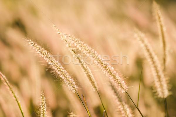 Gaz természet virág zöld kert szín Stock fotó © sweetcrisis