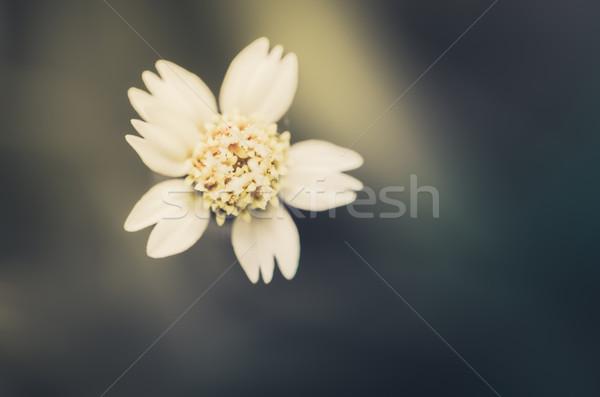 çim çiçeklenme bitki yeşil doğa bahçe Stok fotoğraf © sweetcrisis