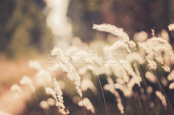 Flor planta vintage erva daninha natureza jardim Foto stock © sweetcrisis