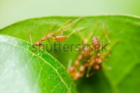 Solucan yeşil doğa bahçe gıda arı Stok fotoğraf © sweetcrisis