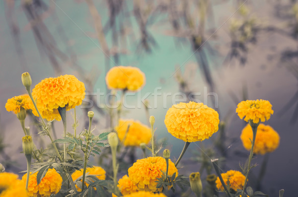 Flor vintage natureza jardim casamento cabeça Foto stock © sweetcrisis