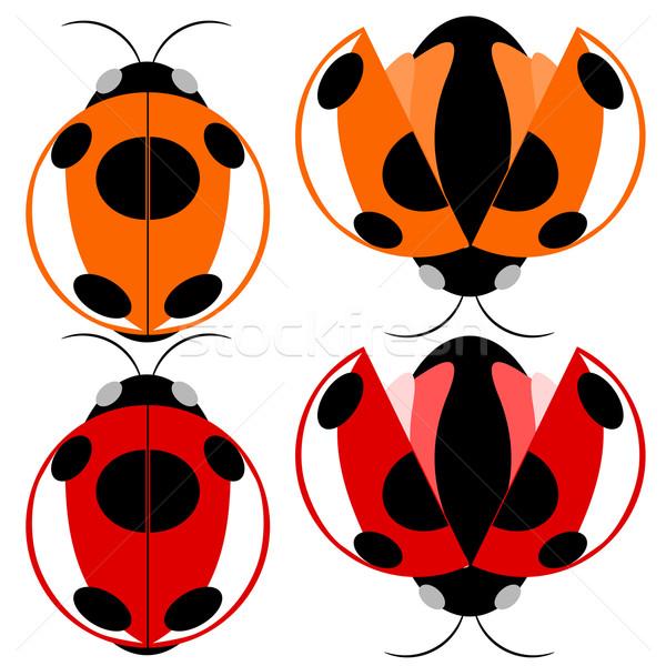 Beetle illustration Stock photo © sweetcrisis