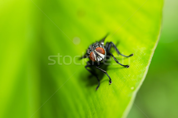 Uçmak yeşil doğa şehir gıda ev Stok fotoğraf © sweetcrisis