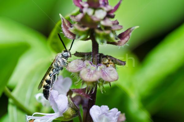 Vespa verde natura giardino sfondo ape Foto d'archivio © sweetcrisis