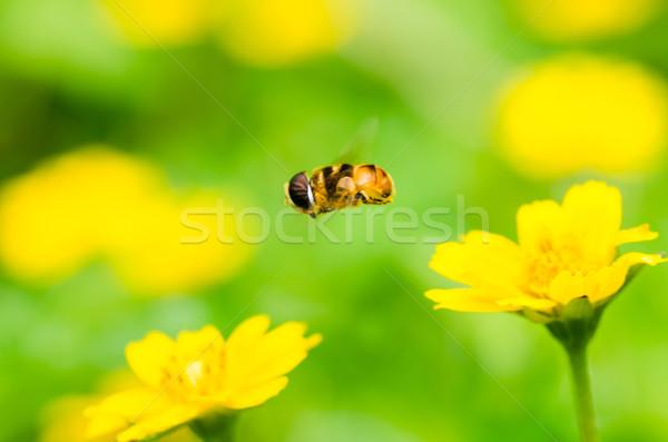 Zdjęcia stock: Owoców · plików · kwiat · makro · zielone · charakter
