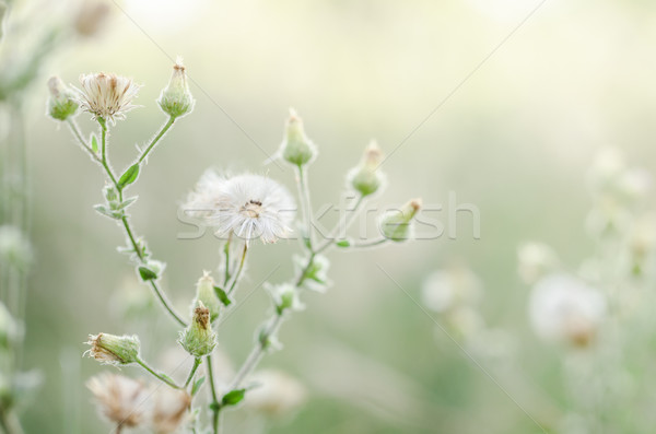 Flower plant grass Stock photo © sweetcrisis
