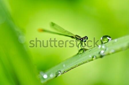 Rosso ant potente verde natura lavoratore Foto d'archivio © sweetcrisis