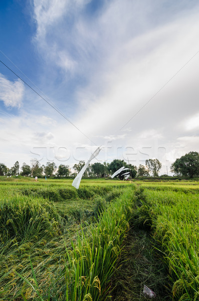 Rijstveld Thailand landbouw industrie veld boerderij Stockfoto © sweetcrisis