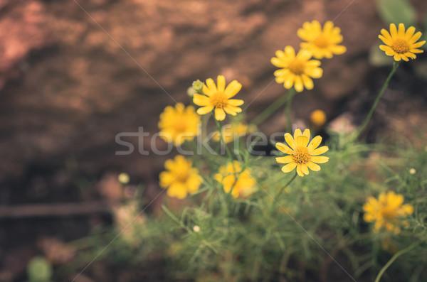 желтый цветок Vintage небольшой саду природы парка Сток-фото © sweetcrisis