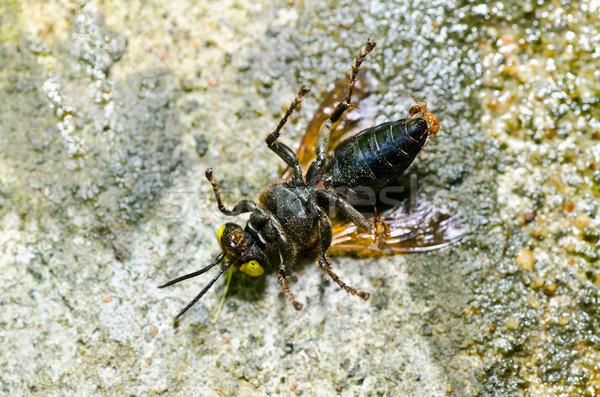 Formigas vespa verde natureza jardim abelha Foto stock © sweetcrisis