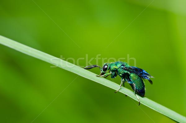 Verde vespa natura giardino ape bianco Foto d'archivio © sweetcrisis
