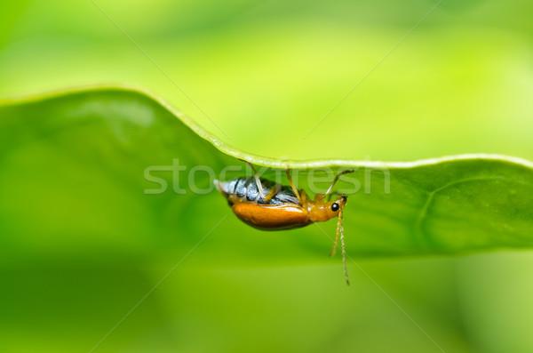 Narancs bogár zöld természet kert park Stock fotó © sweetcrisis