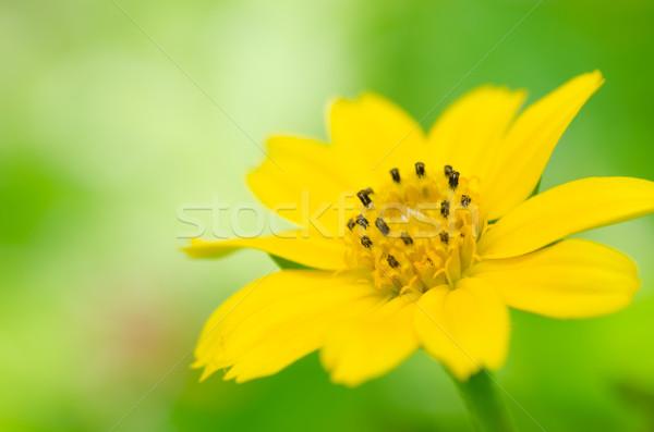 黄色 星 緑 自然 夏 ストックフォト © sweetcrisis