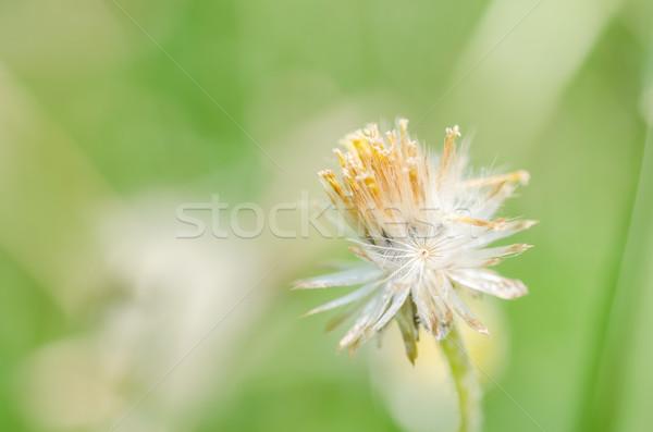 花 工場 雑草 自然 庭園 美 ストックフォト © sweetcrisis