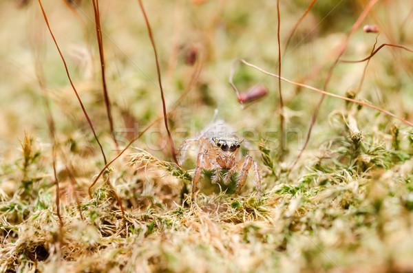 Foto stock: Saltando · aranha · verde · natureza · jardim