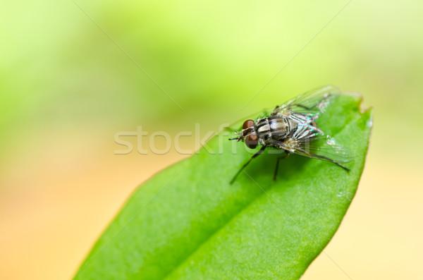 Uçmak yeşil doğa şehir ev beyaz Stok fotoğraf © sweetcrisis