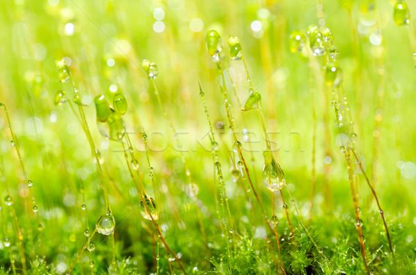 Vers mos groene natuur waterdruppels oude Stockfoto © sweetcrisis