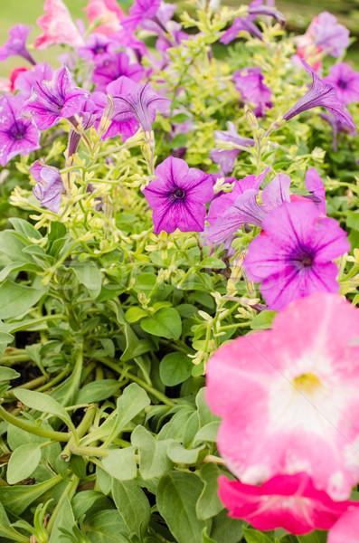 саду природы парка лист лет зеленый Сток-фото © sweetcrisis