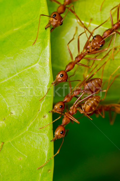Piros hangya csapatmunka épület otthon munkás Stock fotó © sweetcrisis