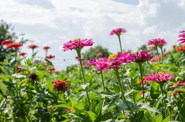 Virág kék ég kert természet park boldog Stock fotó © sweetcrisis
