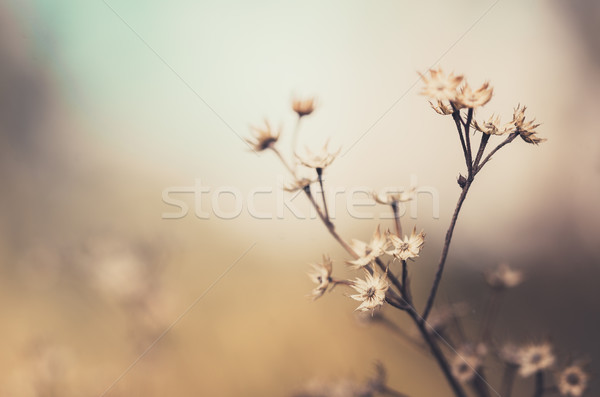 Flower plant vintage Stock photo © sweetcrisis
