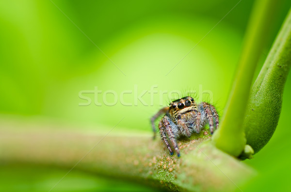 ストックフォト: ジャンプ · クモ · 緑 · 自然 · 庭園 · 春