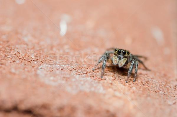 Pók fal természet makró lövés félelem Stock fotó © sweetcrisis